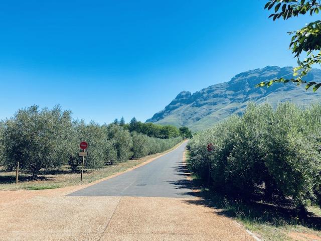 Hiking up Simonsberg from Tokara